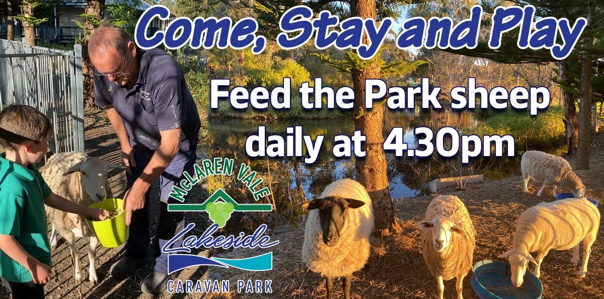 Come stay and play feed the sheep